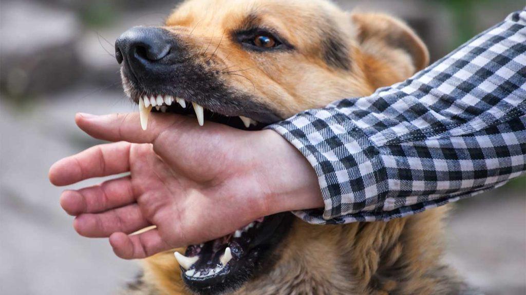 Mơ thấy bị chó cắn là điềm báo gì? Nên chơi con gì khi bị chó cắn?