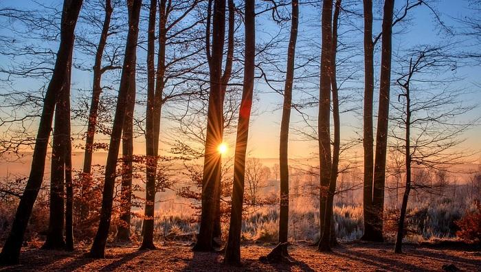 Những giấc mơ thấy cây cối có ý nghĩa gì? Là điềm báo gì?