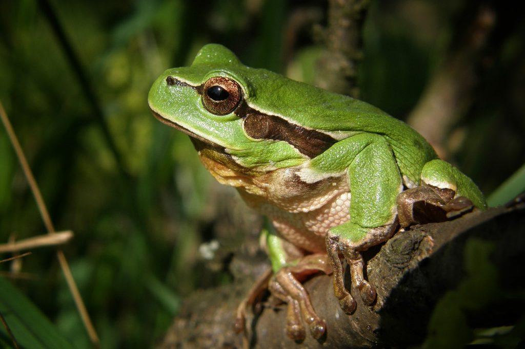Giải mã giấc mơ thấy con ếch – Mơ thấy ếch nên làm gì?