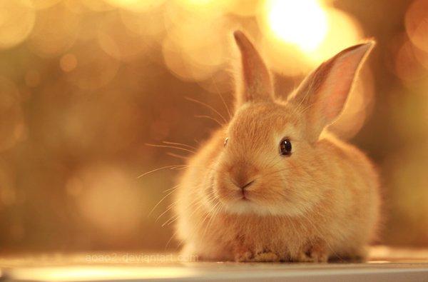 Mơ thấy thỏ đánh con gì? Chiêm bao thấy con thỏ là điềm gì?
