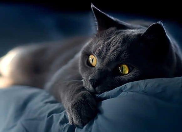 Giải mã chi tiết giấc mơ thấy con mèo đen