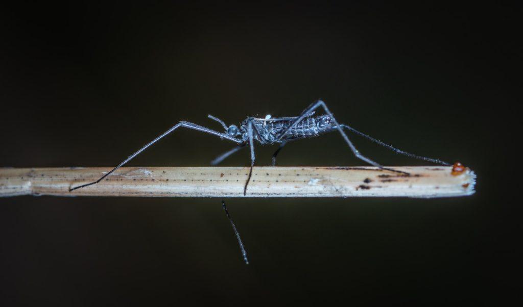 Giấc mơ về con muỗi có ý nghĩa thế nào? giải mã giấc mơ