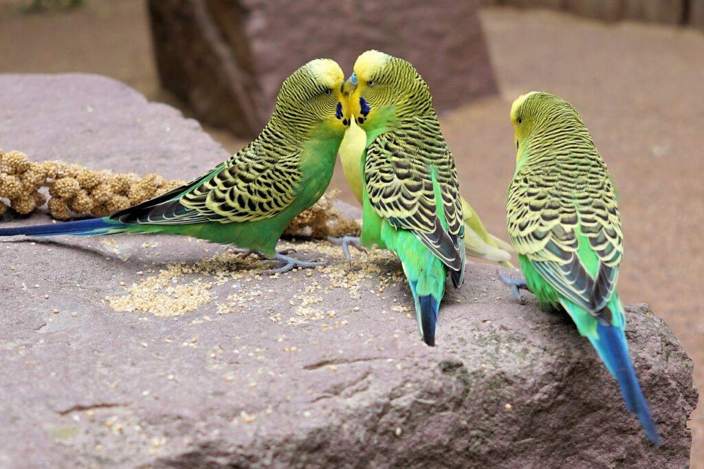 Mơ thấy con vẹt đuôi dài là điềm báo gì? Tốt hay xấu?