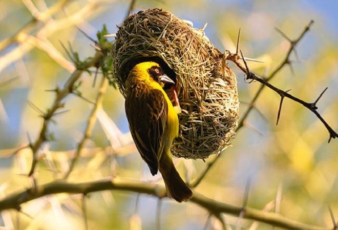 Nằm mơ thấy tổ chim đánh con gì đánh số mấy? Có điềm gì?