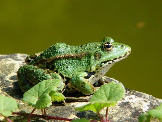 mơ thấy ếch đuổi theo